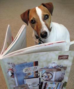 Dog-Catty-WHAT