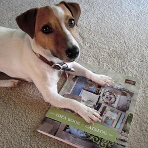 DogCatalog