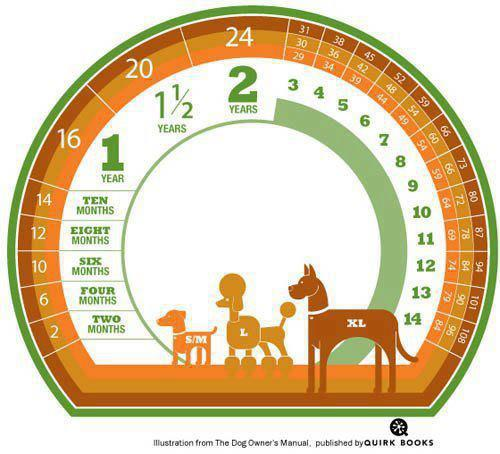 Dogs Age Chart