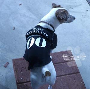 Dog in Football Shirt