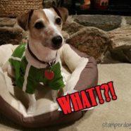 Dog Bones & Low Inventory Warning