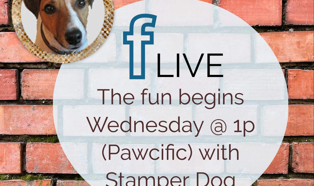 Yes, We're Going Live Again Today!