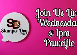 Stampin' Up! Live Stream Wednesday!