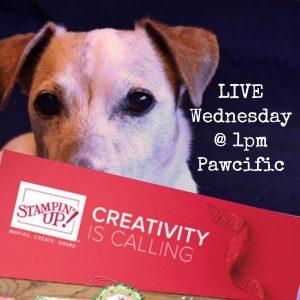 Wednesday Live Stream