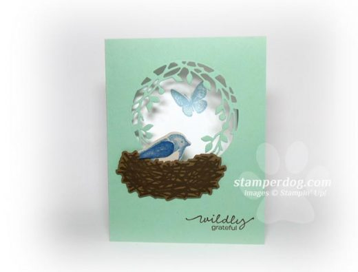 Bird Window Card