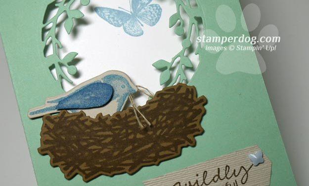 Finally Made a Bird Window Card!