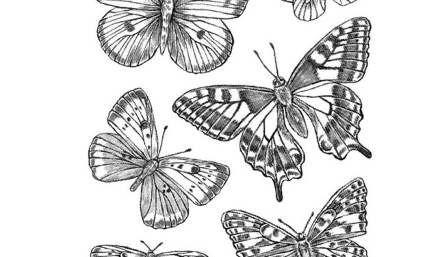 Everything's Coming Up Butterflies