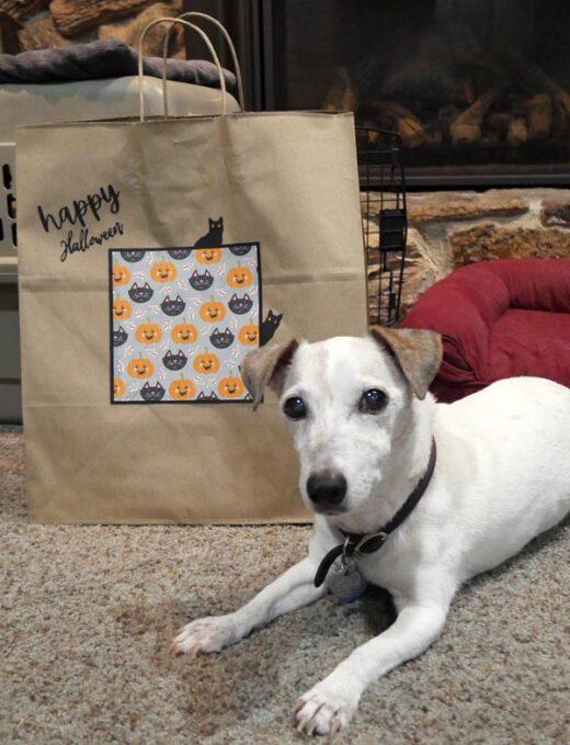 Fancy Trick or Treat Bag